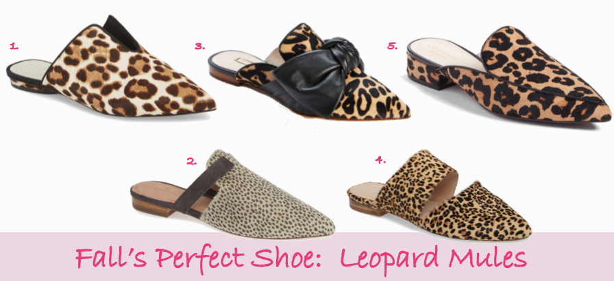 leopard-mule-header.png